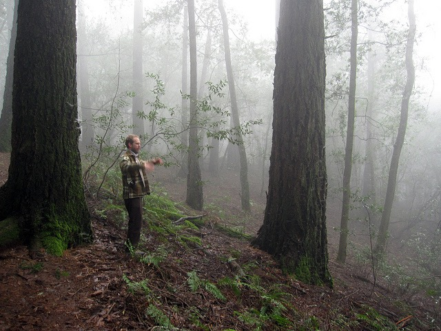 Fog, trees and a friend at Annadel State Park.